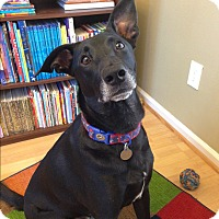 Adopt A Pet :: Luka - Marietta, GA