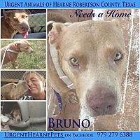 Adopt A Pet :: Bruno - Hearne, TX