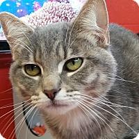 Adopt A Pet :: Kyle Busch - Sarasota, FL
