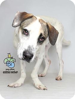 Hound (Unknown Type) Mix Dog for adoption in Knoxville, Tennessee - Caden