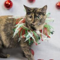 Adopt A Pet :: Minnie - Bedford, IN