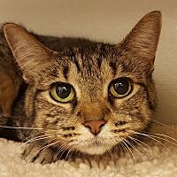 Adopt A Pet :: Nermal - Grayslake, IL