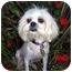 Photo 2 - Lhasa Apso Dog for adoption in Los Angeles, California - HONEE