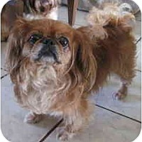 Adopt A Pet :: Katie - N. Fort Myers, FL