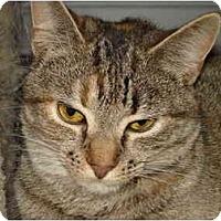 Adopt A Pet :: Perch - Chesapeake, VA