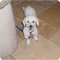 Adopt A Pet :: Ryley - Scottsdale, AZ