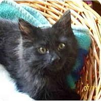 Adopt A Pet :: JT(Jack Tripper) - Cleveland, OH