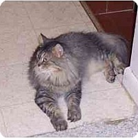 Adopt A Pet :: Cole - Simms, TX