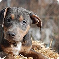 Adopt A Pet :: Treat - Portland, ME