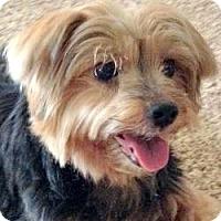 Adopt A Pet :: Brie - Dartmouth, MA