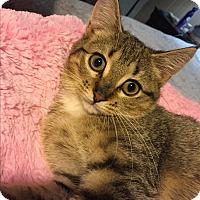 Adopt A Pet :: Skittles - Simpsonville, SC