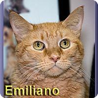 Adopt A Pet :: Emiliano - Aldie, VA