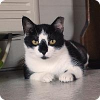 Adopt A Pet :: Oreo - McCormick, SC