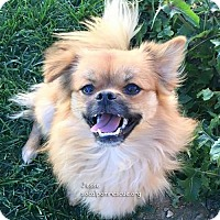 Adopt A Pet :: Jesse - Studio City, CA