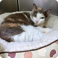 Adopt A Pet :: Magnolia - Norfolk, VA