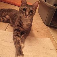 Adopt A Pet :: Samantha (KLL) 8.10.14 - Orlando, FL