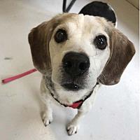 Adopt A Pet :: Wilson - Brunswick, ME