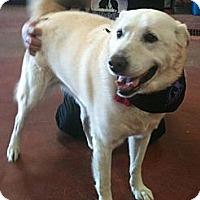 Adopt A Pet :: Missy-GREAT dog! - Hadley, MI