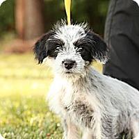 Adopt A Pet :: Frankie - Lancaster, OH