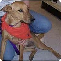 Adopt A Pet :: Dorrito - Scottsdale, AZ