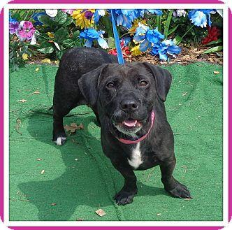 Basset Hound Mix Dog for adoption in Marietta, Georgia - GLORY (R)