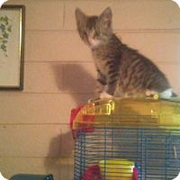 Adopt A Pet :: Jasmine - Chandler, AZ