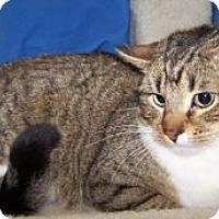 Adopt A Pet :: Simba - Colorado Springs, CO