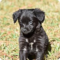 Adopt A Pet :: Bart - South Dennis, MA