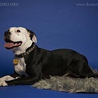 Adopt A Pet :: Starburst - Blacklick, OH