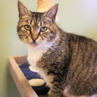 Adopt A Pet :: Jade - Winchester, TN