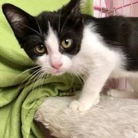 Adopt A Pet :: Gary Cooper - Garland, TX