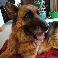 Adopt A Pet :: Baby - Denver, CO