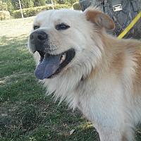 Adopt A Pet :: Teddy! - Sacramento, CA