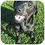 Photo 1 - Labrador Retriever Mix Dog for adoption in Calgary, Alberta - Landy