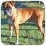 Photo 2 - Boxer Dog for adoption in Gainesville, Florida - Hemi