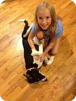 Labrador Retriever/Border Collie Mix Puppy for adoption in Bluff city, Tennessee - LUCY-PUPPY LOVE!!