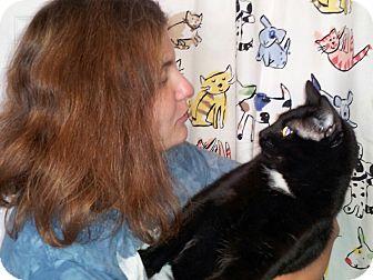 Domestic Shorthair Cat for adoption in Morris, Illinois - RHAPSODY