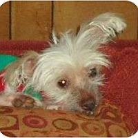 Adopt A Pet :: Kloe - Plainfield, CT