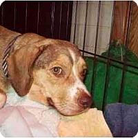 Adopt A Pet :: Gracie May - Phoenix, AZ