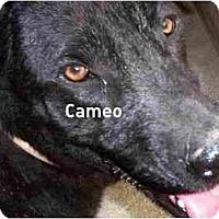 Adopt A Pet :: Cameo,FL - Miami Beach, FL