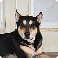 Adopt A Pet :: Rocky! - Sacramento, CA