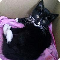 Adopt A Pet :: Lavender - Horsham, PA