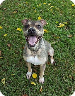Shepherd (Unknown Type) Mix Dog for adoption in Lafayette, New Jersey - Oliver