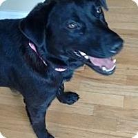 Adopt A Pet :: Canoe - Evergreen, CO