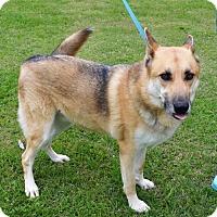 Adopt A Pet :: Sarge - New Iberia, LA