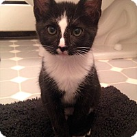 Adopt A Pet :: Pongo - River Edge, NJ