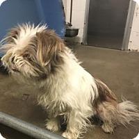 Adopt A Pet :: RAINA - Gustine, CA