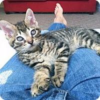 Adopt A Pet :: Pard - Mississauga, Ontario, ON
