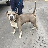 Adopt A Pet :: Menduza - Marietta, GA