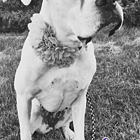 Adopt A Pet :: Neila - Sidney, NE